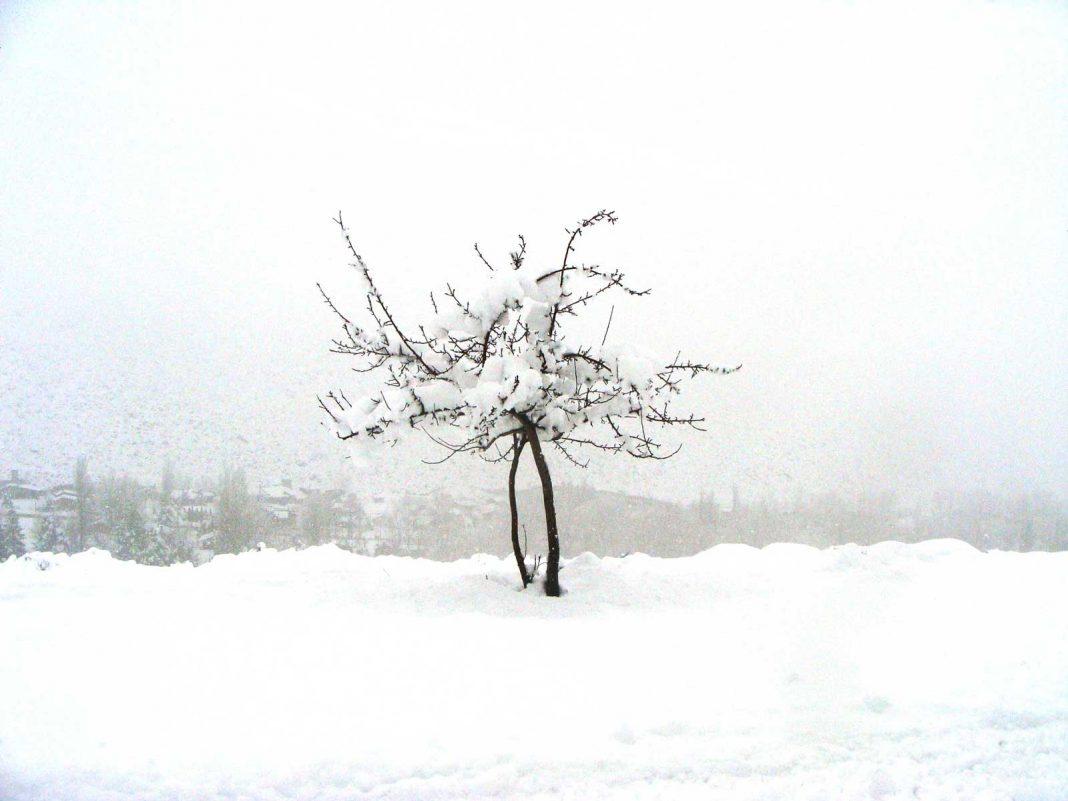 Solitario resiste el temporal. Foto: Ana Vogel