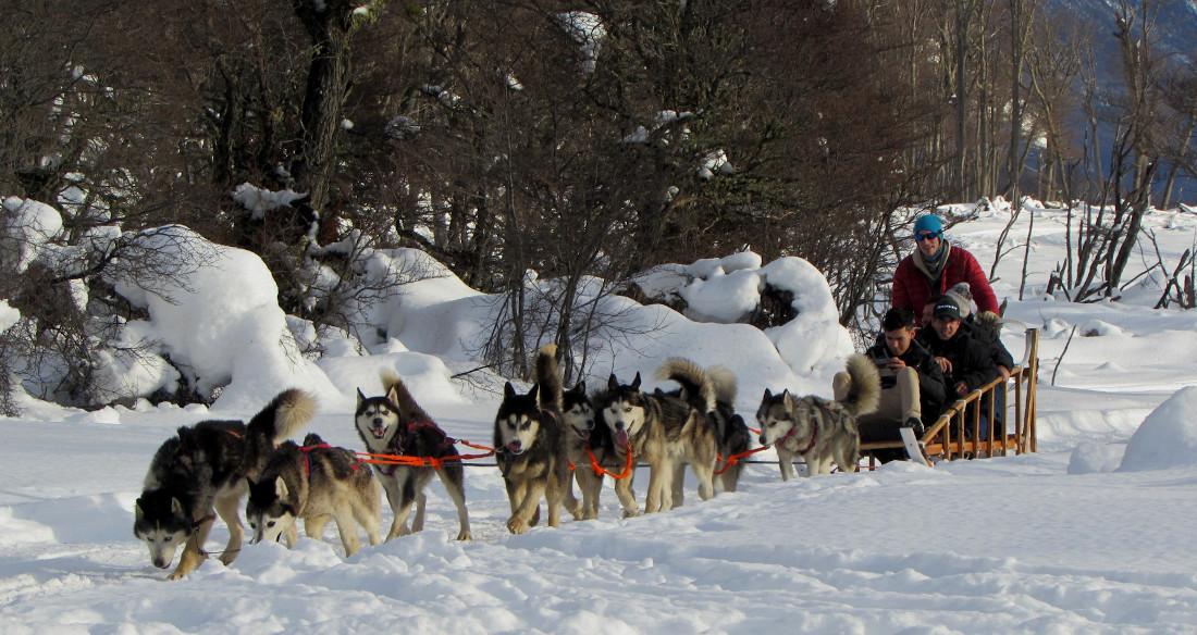 Paseo en trineo tirado por perros, una de las actividades habilitadas en Tierra del Fuego, pero no en forma comercial. Paseo en trineo tirado por perros, una de las actividades habilitadas en Tierra del Fuego, pero no en forma comercial. Ph Martín Gunter.