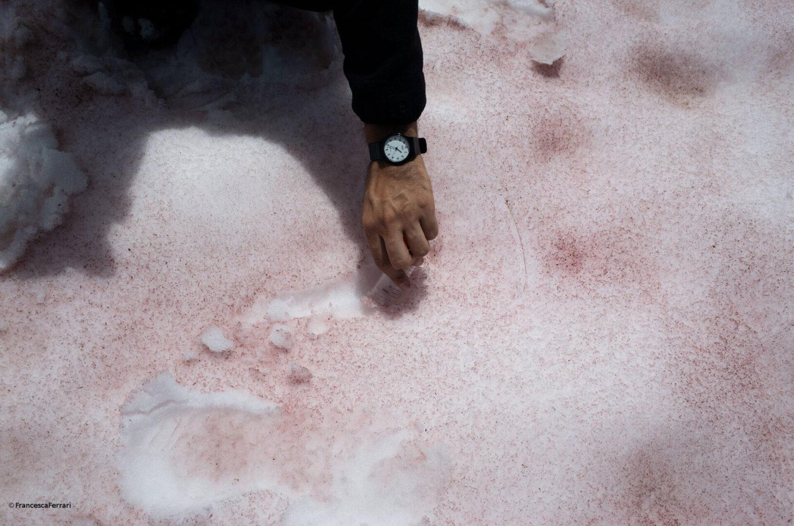 El científico italiano Biagio Di Mauro toma muestras de nieve rosa en el glaciar Presena. (Ph Francesca Ferrari)