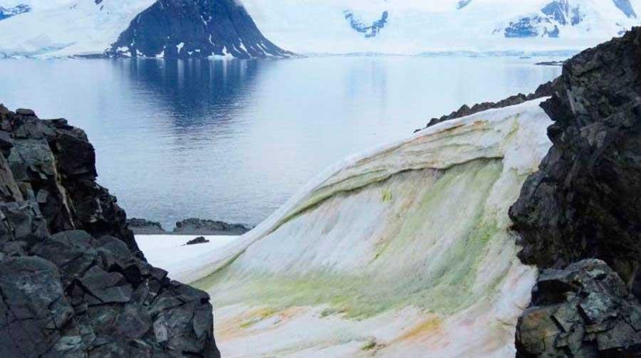 Igual fenómeno se produce cerca de los polos. En este caso en Antártida, con nieve de color verdáceo.