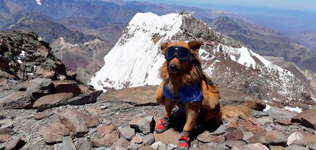 Con todo su equipo e indumentaria, Oro en una de sus cuatro cumbres en Aconcagua.