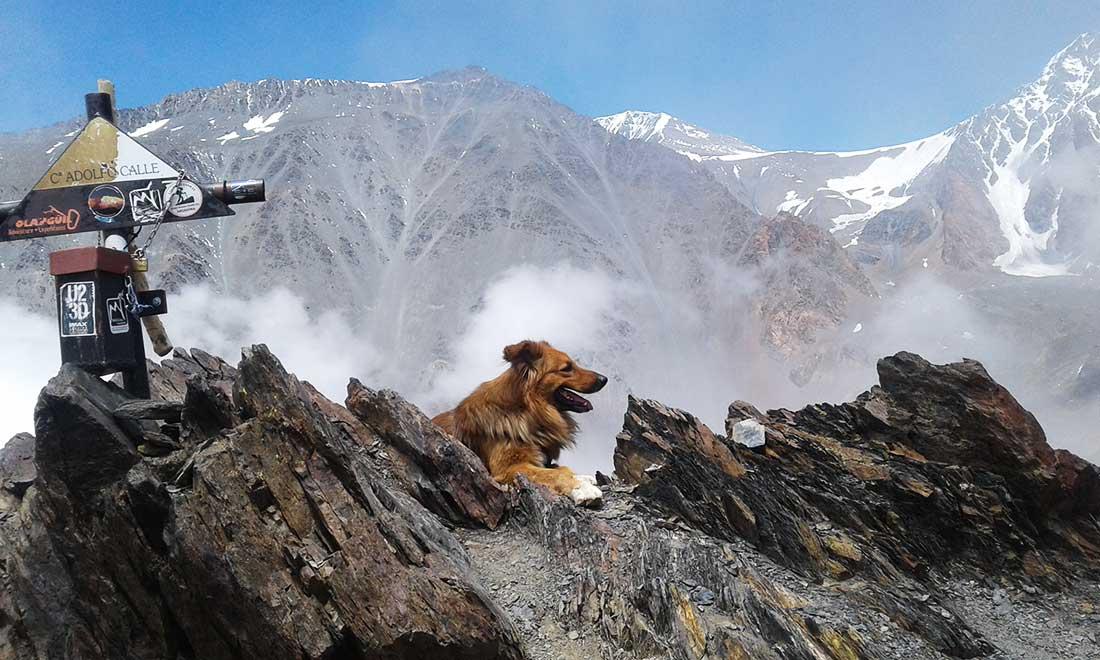 Oro en la cumbre del cerro Adolfo Calle, en el Cordón del Plata.